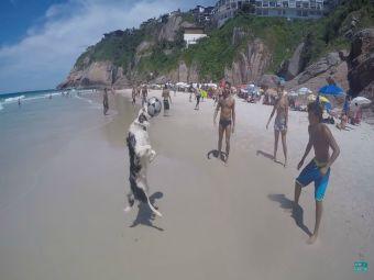 Vídeo muestra que hasta los perros en Brasil juegan mejor que tú el fútbol