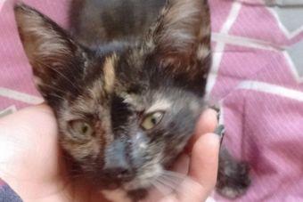 Historias de rescate animal: una gatita con suerte