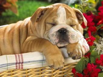Resultado de imagen para perros durmiendo