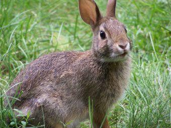 Historias de mascotas: Copín, el conejito que iba a ser cocinado por accidente