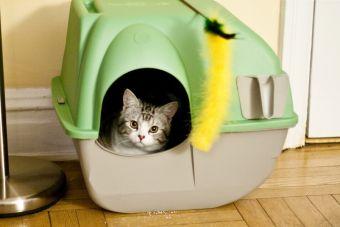Cajas de arena especiales para tu gato