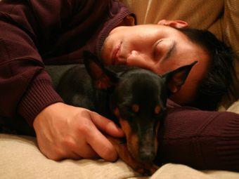 ¿Tu mascota siente cuando te enfermas?
