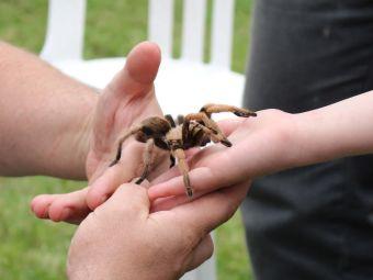 Videos de tarántulas y sus amos