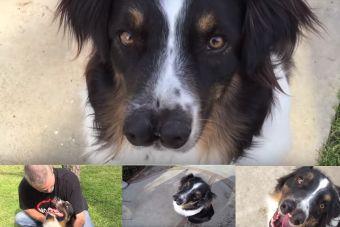 Toby, el perrito de dos narices que casi fue eutanasiado por lucir diferente