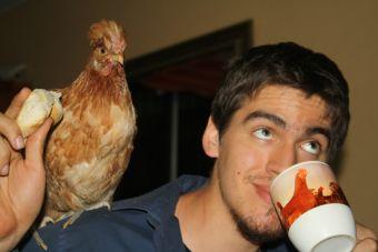 5 impresionantes beneficios de criar una gallina en casa