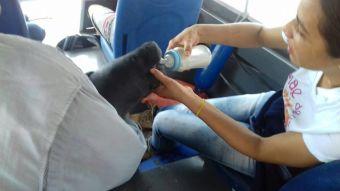 Rescatistas alimentan con mamadera a manatí que perdió a su mamá