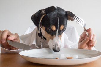 ¿Por qué mi perro come caca?