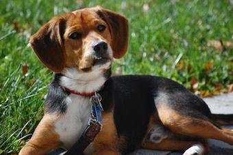 Las 10 razas de perros más hediondas