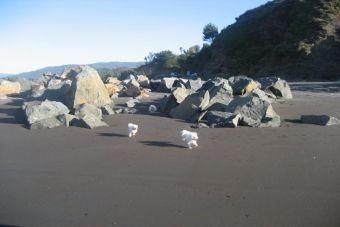 Historias de mascotas: Vacaciones Perrunas