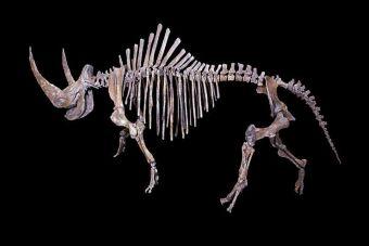 Animales Extintos: Rinoceronte Lanudo