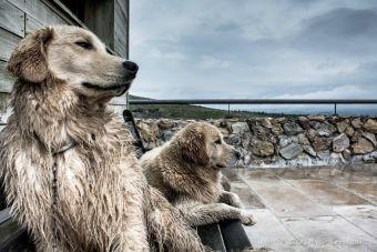 7 Productos para los perros para los días de lluvia