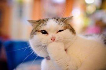 10 imágenes de gatos graciosos en redes sociales