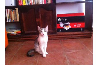 Historias de mascotas: Tito el Gatito