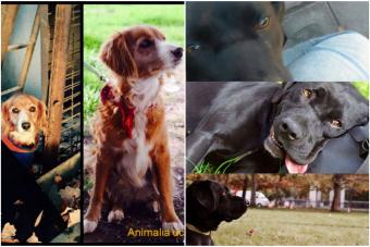 Historias de mascotas: Pancha y Pantera