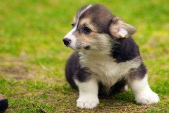 ¿Cómo hacerle cariño a un cachorro?