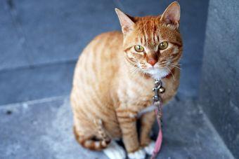 5 Razas de gatos ideales para departamento