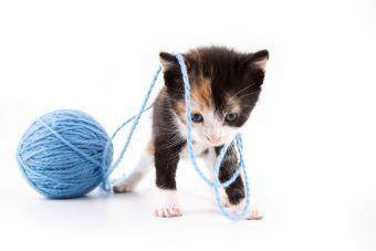 ¿Cómo jugar con un gatito en un departamento?
