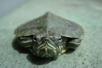 Recomendaciones Para Tener El Acuario Perfecto Para Tortugas