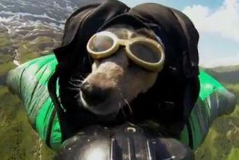 Este es el primer salto base del mundo protagonizado por un perro