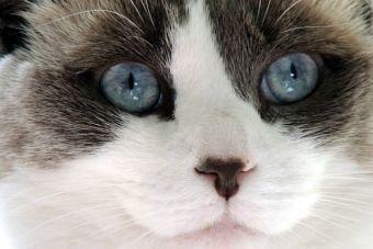 ¡Horrible! Peta descubre experimentos con gatos en 10 universidades del Reino Unido