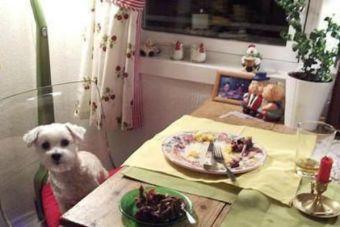 ¿Antropomorfista? ¡Cuidado con humanizar a nuestras mascotas!