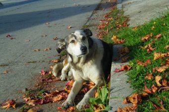 ¿Estás seguro de poder criar un perro?: Ocho razones por las que deberías dudar