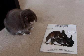 ¿Cómo enfrentar el periodo de celo en los conejos?