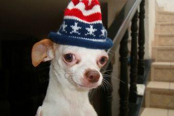 10 imágenes de perritos que me hacen sentir identificado