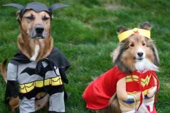 Disfraces en mascotas: ¿Bueno o malo?