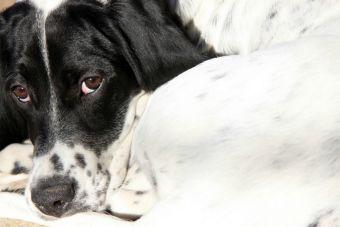 Condenan a hombre por maltrato animal en Antofagasta