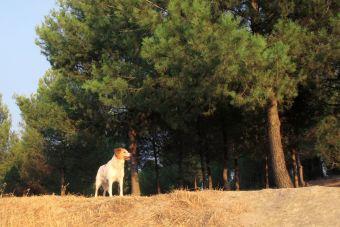 Perrito cuidó a niña por 12 días en que estuvo perdida en un bosque de Siberia