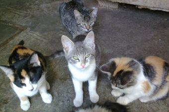 La historia de la mujer que albergó en su casa a 175 gatos con leucemia