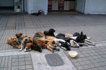 Quilpué: Convocan a velatón a un año de matanza de perritos por caso de rabia