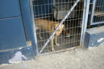 Cinco millones de perros son sacrificados anualmente en Vietnam para su consumo