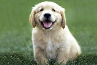 ¿Optimista o pesimista? Nuevo estudio sobre los perros revela diferentes personalidades