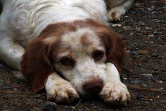 Anorexia canina: ¿Qué hacer si mi perro no quiere comer?
