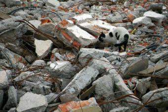 Video: Gatito salvó ileso tras demolición de edificio en Canadá