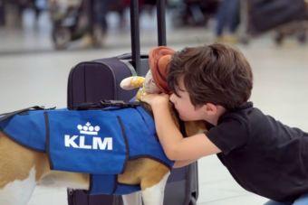 Video: ¿Y si un perro te devolviera lo que perdiste en un avión?