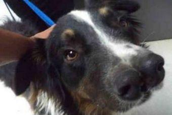 Perrito con dos narices sorprendió en un refugio de California