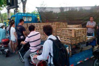 En China rescatan a decenas de gatitos antes de ser vendidos para consumo humano