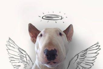 Bull Terrier protagoniza ilustraciones creadas por su dueño en Instagram