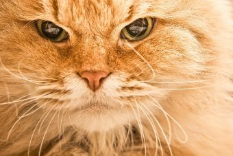 ¿Tu gato está enojado? ¡No lo acaricies!