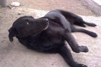 Historias de Mascotas: la 'Negrita', mañosa y excelente madre
