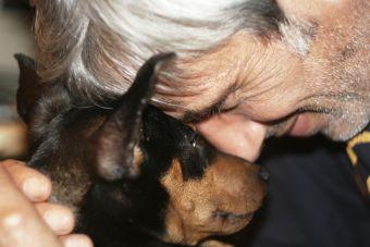 Nuevo proyecto de tenencia responsable de mascotas es despachado desde el Senado
