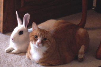 Rescate Animal: El día en que mi gato rescató a mi conejo