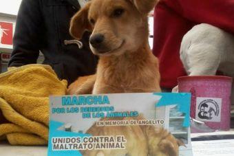 ¡Contra el maltrato animal! Marcha por los derechos de los animales