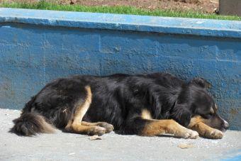 Capturarán y esterilizarán a perros callejeros en Punta Arenas por orden del municipio