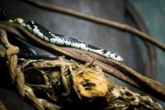 Mujer fanática de los animales convirtió su hogar en un zoológico de especies rescatadas