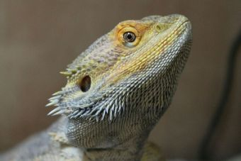 Reino Unido: Promueven folleto informativo sobre riesgos de tener mascotas exóticas