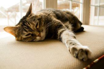 Aplicación permite escuchar y crear melodías con ronroneos felinos